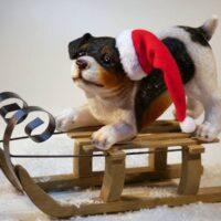 hund-med-nissehat-paa-traekaelk