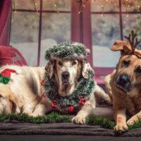 julebillede-med-tre-sjove-hunde